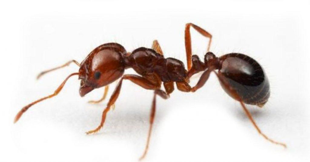mersin tarsus erdemli mezitli karınca ilaçlama