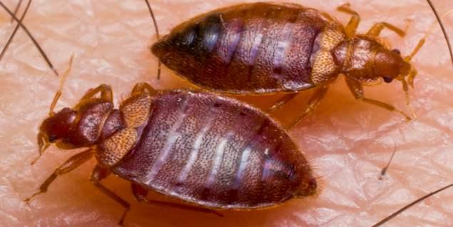 mersin tahta kurusu yatak böceği ilaçlama
