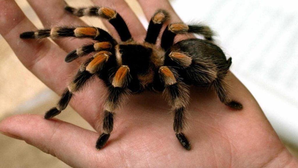 mersin örümcek ilaçlama