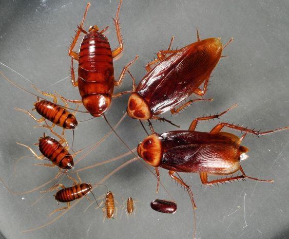 mersin hamam böceği ilaçlama