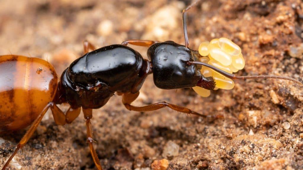 Mersin Karınca ilaçlama